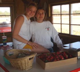 Strawberriesonthefarm