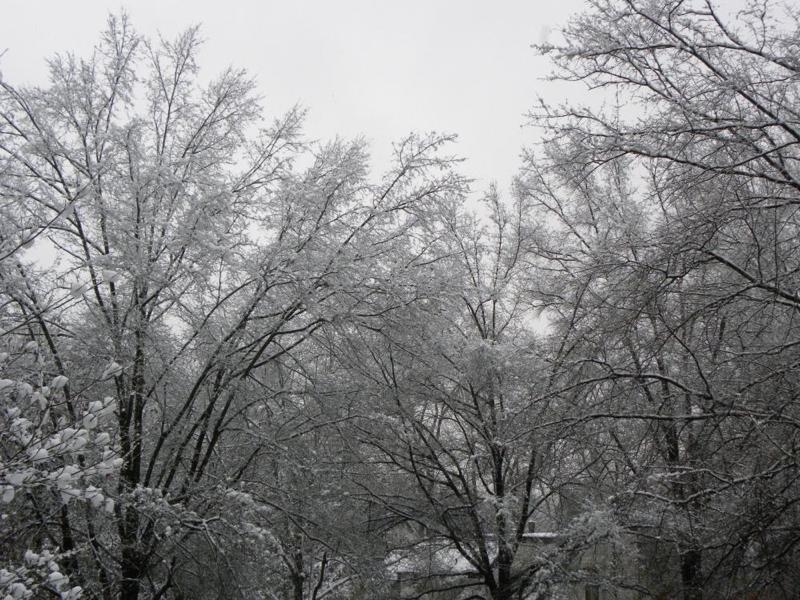 Snowyrestontrees