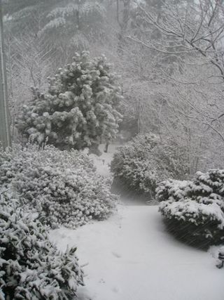 SnowDay7