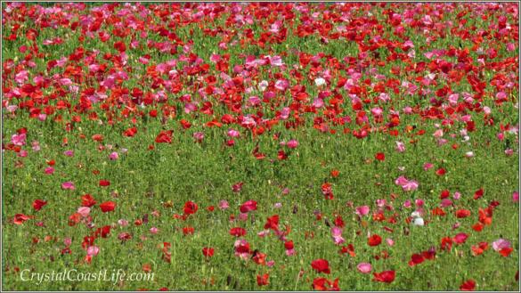 Flowerswm585