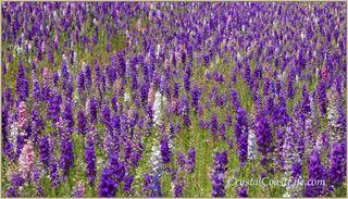 Flowerswm