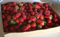 Carteretberries