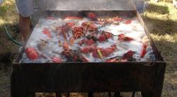 Lobsters_2