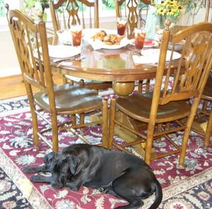 Chickenguarddog