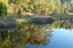 Fall_reflection