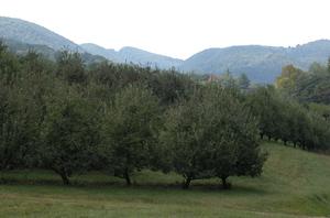 Jamisonsorchard