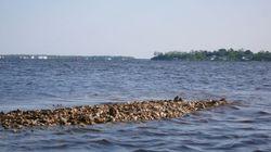 Oysterrock
